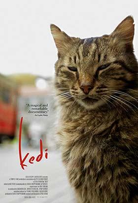 دانلود رایگان فیلم Kedi 2017